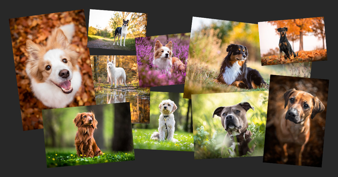 Hunde Collage